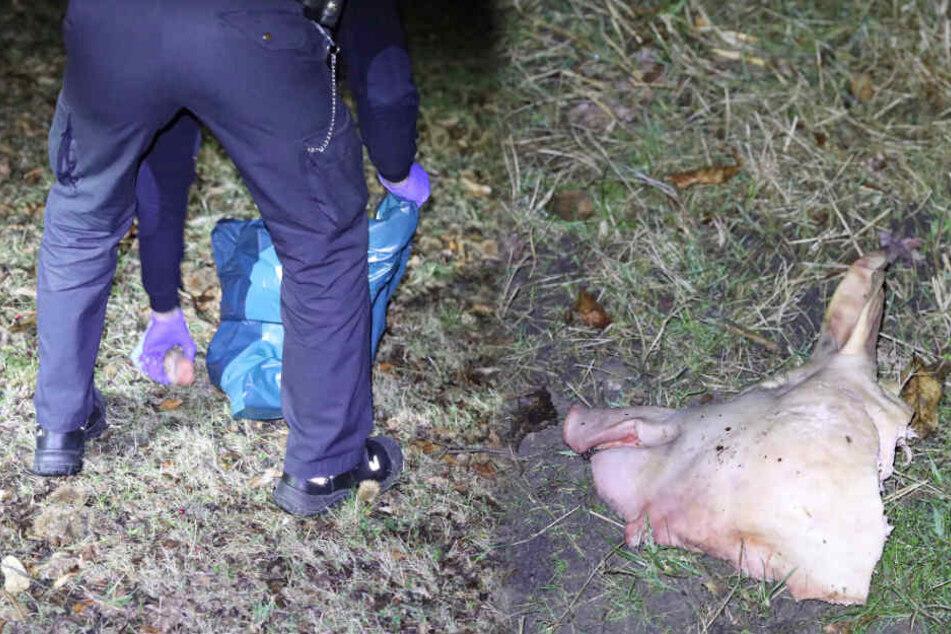 Unbekannte legen Schweinekopf auf Moschee-Gelände ab