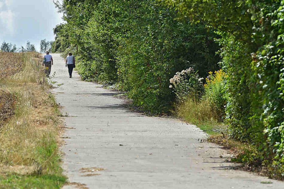 Einer der neuen Wege führt von Nord nach Süd, der andere von Ost nach West durch den neuen Südpark.