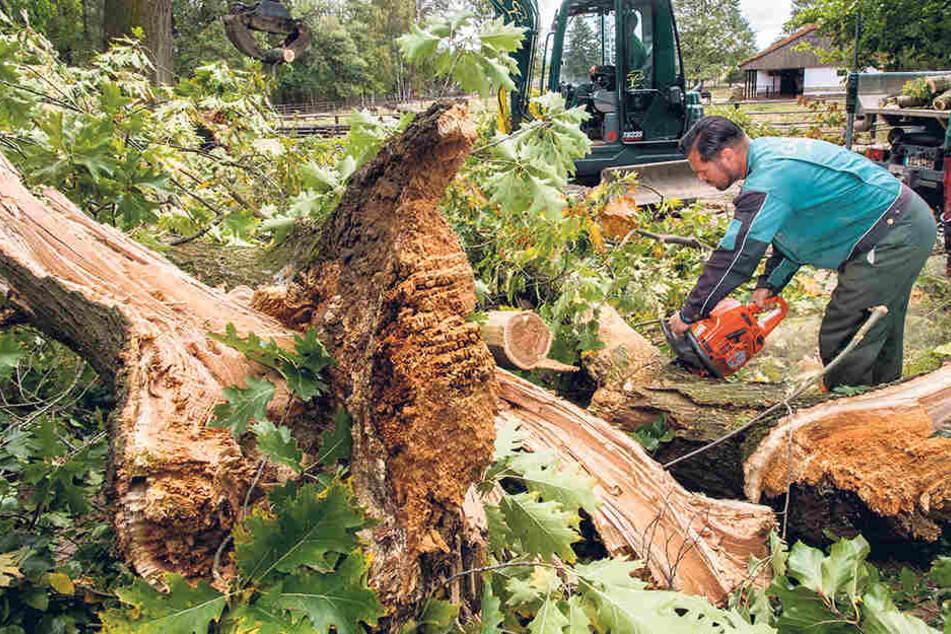 Zahlreiche Helfer beseitigten im Tierpark Hirschfeld die Sturmschäden. Am Samstag sind Besucher wieder willkommen.