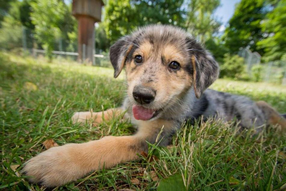 Jedes Tierheim hat Besuchszeiten. So können sich die Tiere zwischendurch auch immer wieder entspannen, denn zu viel Trubel kann schnell stressig werden.