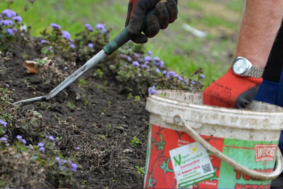 Beim Umgraben seines Gartens ist ein Mann in Altötting auf allerlei Knochen eines Hundes gestoßen. (Symbolbild)