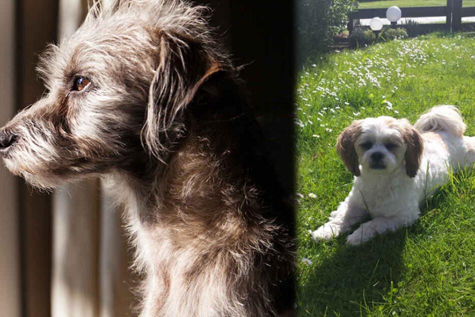 Mysteriöses Hundesterben: Ist auch die kleine Aimy (†6) ein Opfer?