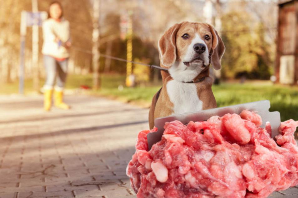 Hundehasser bestückt Fleischköder mit Nägeln