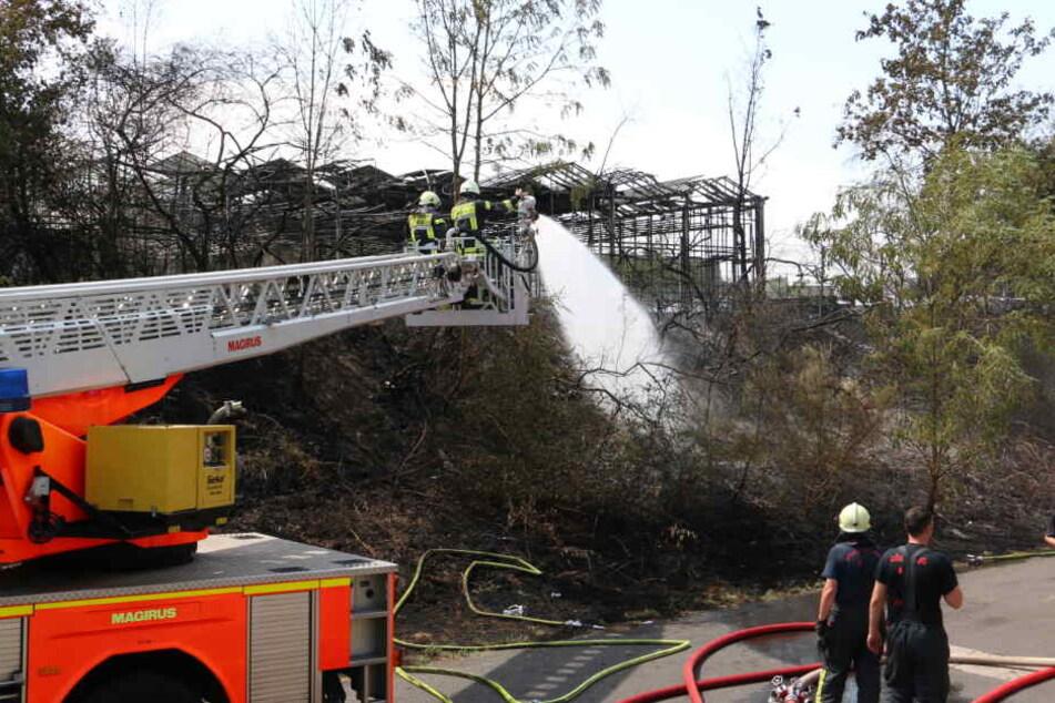 Ursache soll ein brennender Öltank in einem Gewächshaus gewesen sein.