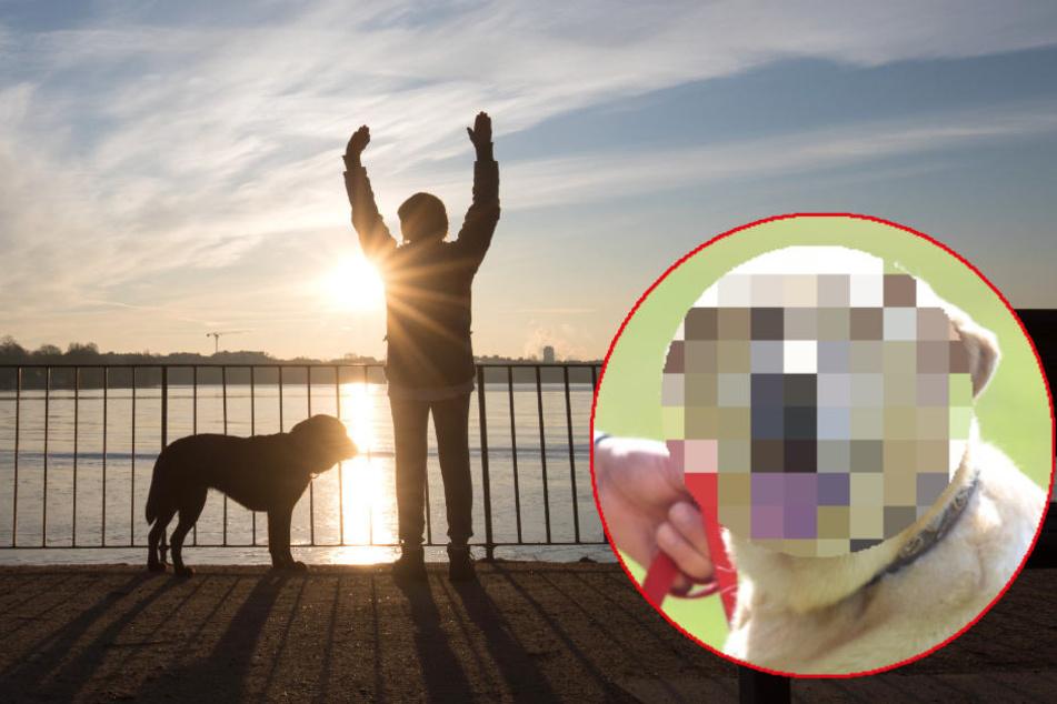 Diese Hunderasse ist in Hamburg am beliebtesten