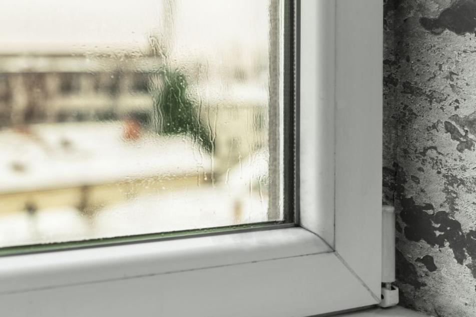 Die Kondensation in den Fenstern führen zu Schimmel und Feuchtigkeit im Haus. (Symbolbild)