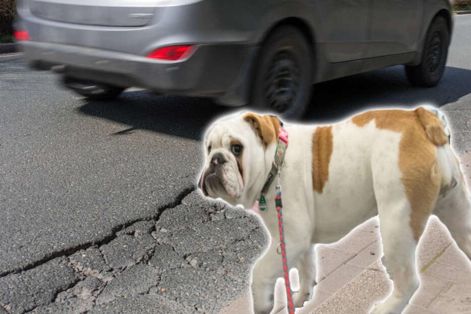 Hund läuft einfach auf Straße: Drei Verletzte bei Auffahrunfall