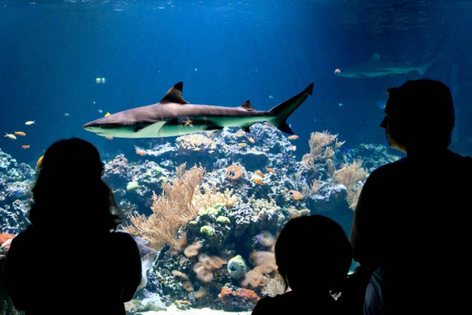 """Schon nächstes Jahr soll """"Shark City"""" eröffnet werden (Symbolfoto)."""