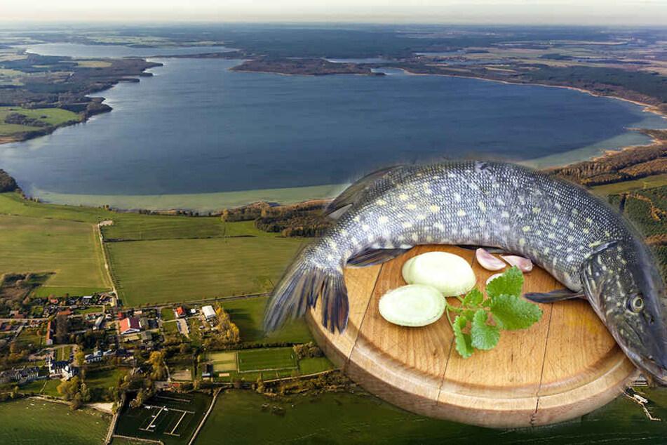 Auf dem Kölpinsee schlugen die Fischwilderer aus dem Kreis Paderborn zu (Symbolbild).