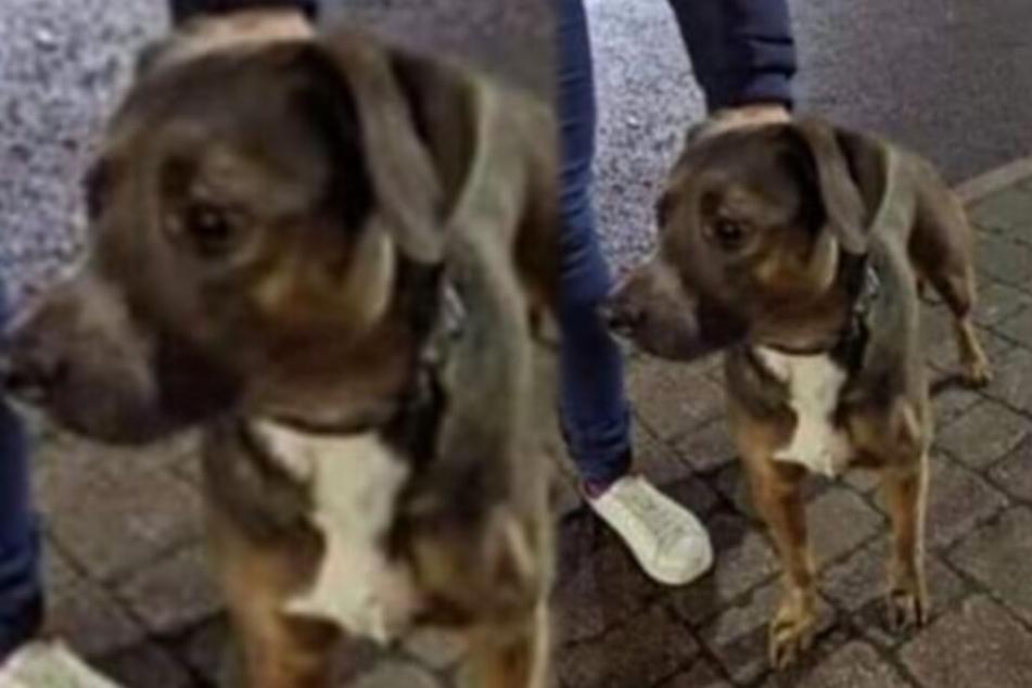 Weil er anscheinend auf den Küchenboden pinkelte, wurde Hund Diesel brutal getötet.