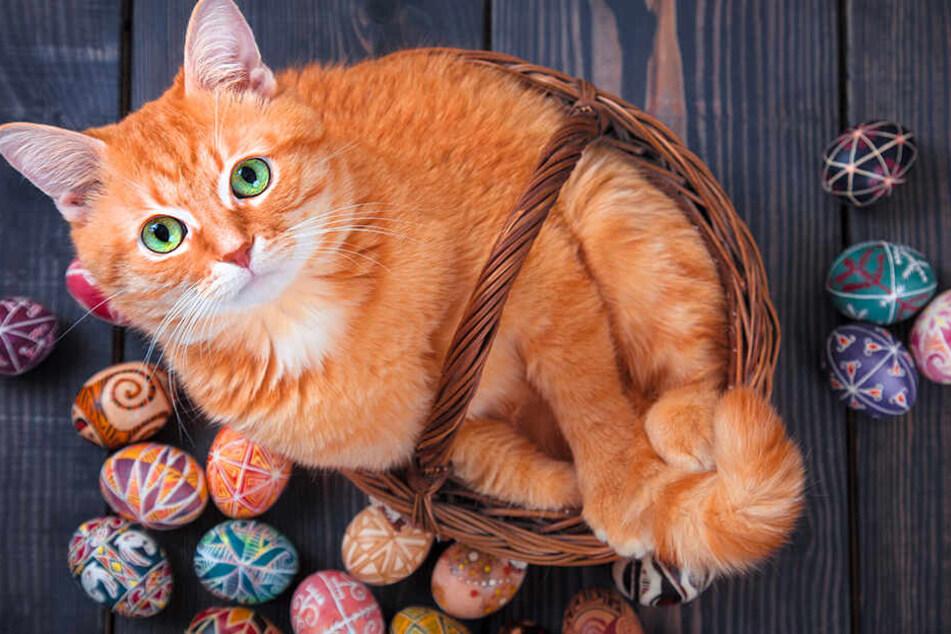 Die Antwort überrascht! Darf eine Katze (rohe) Eier essen?