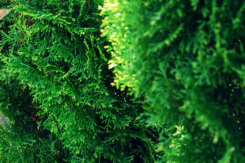 Ein Mann hat sich in Füssen als Busch verkleidet. (Symbolbild)