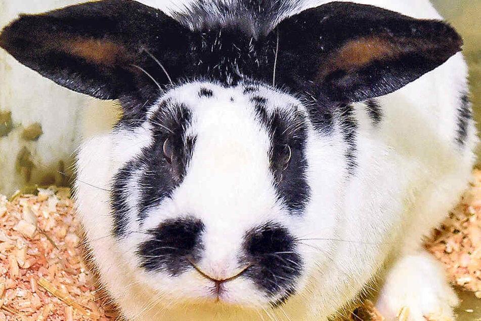 Oreo wurde nicht artgerecht gehalten, wurde mit 300 Artgenossen aus einer Gartensparte befreit.