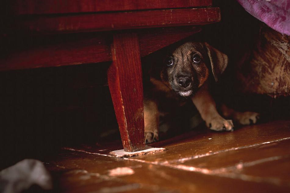 Der Hund braucht einen Rückzugsort, wenn er Angst an Silvester hat.