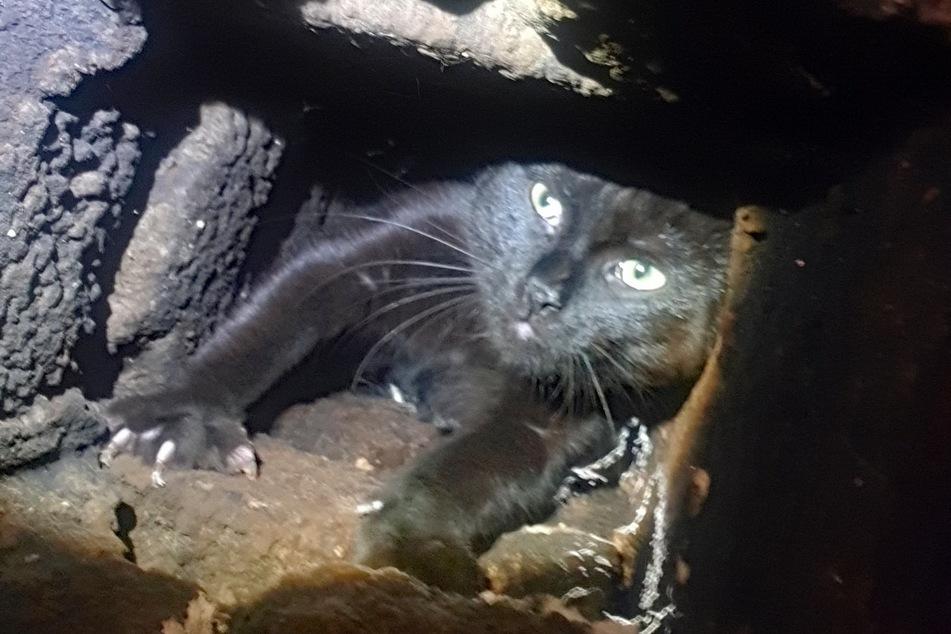 Die Katze flüchtete vor ihren Helfern in einen Schornstein und blieb mit dem Kopf voran stecken.