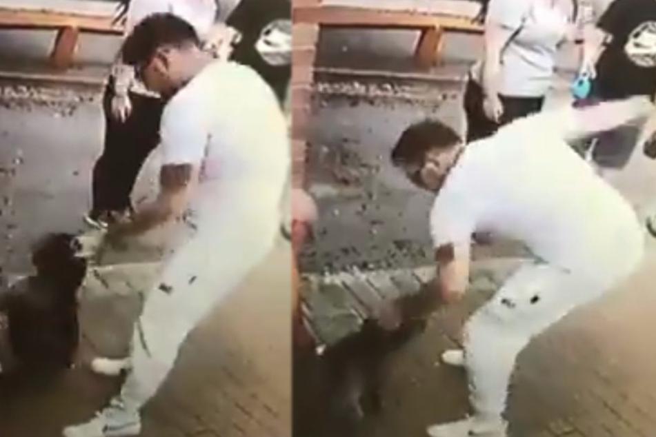 Verstörendes Video: Mann schlägt auf armen Hund ein und ahnt nicht, was er damit auslöst