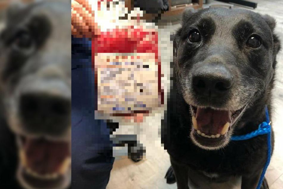 Kurz vor der Entstehung dieses Bildes hat dieser stolze Hund ein Leben gerettet!