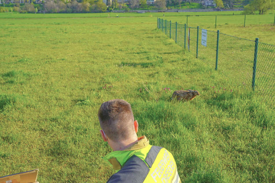 An den Elbwiesen entließen die Kameraden den Hasen ins Freie.