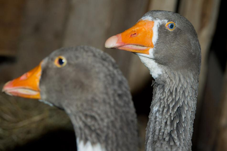 Zoos reagieren nach neuem Vogelgrippe-Fall in Deutschland