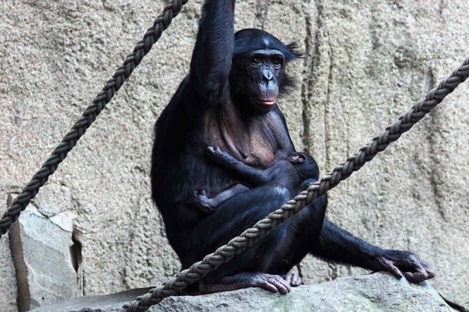 Wie süß: Seltener Nachwuchs im Leipziger Zoo