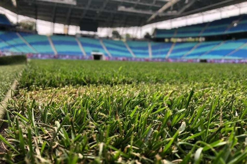In der Red Bull Arena liegt nach dem Pilzbefall wieder neuer, saftig-grüner Rasen.