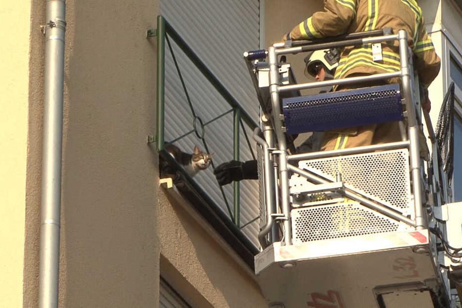 Die Katze befand sich im vierten Stock auf einem Fensterbrett.