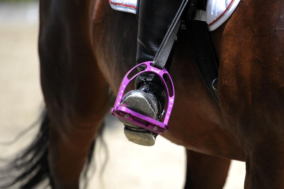 Eine andere Reiterin fand die Frau eingeklemmt unter ihrem bereits toten Pferd. (Symbolbild)