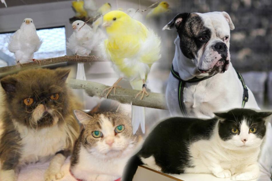Hund, Katze, Vogel: Wer gibt Joker, Gustav und Baby eine zweite Chance?