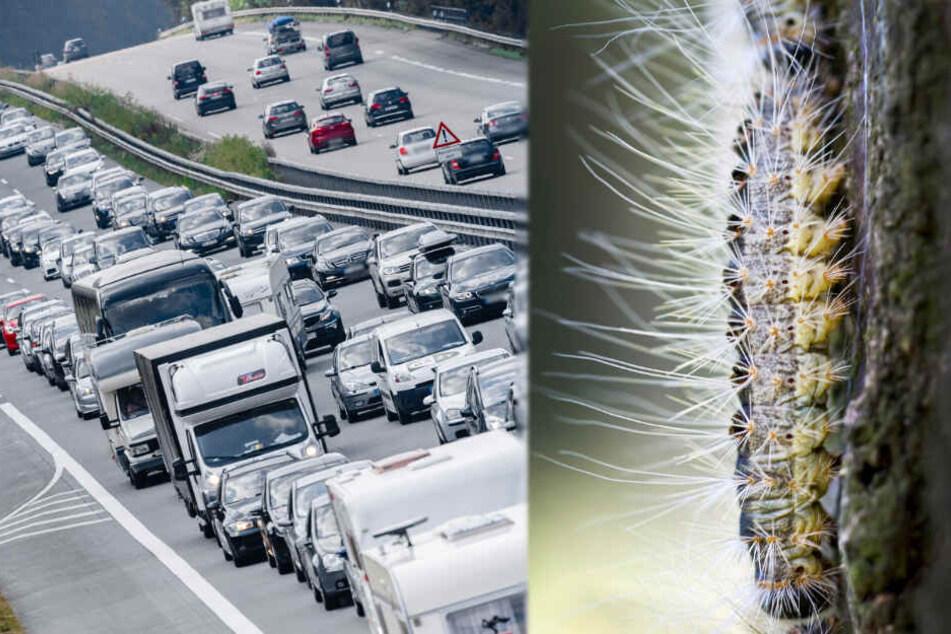 Autobahnen rund um Hamburg wegen giftigen Raupen über Nacht gesperrt!
