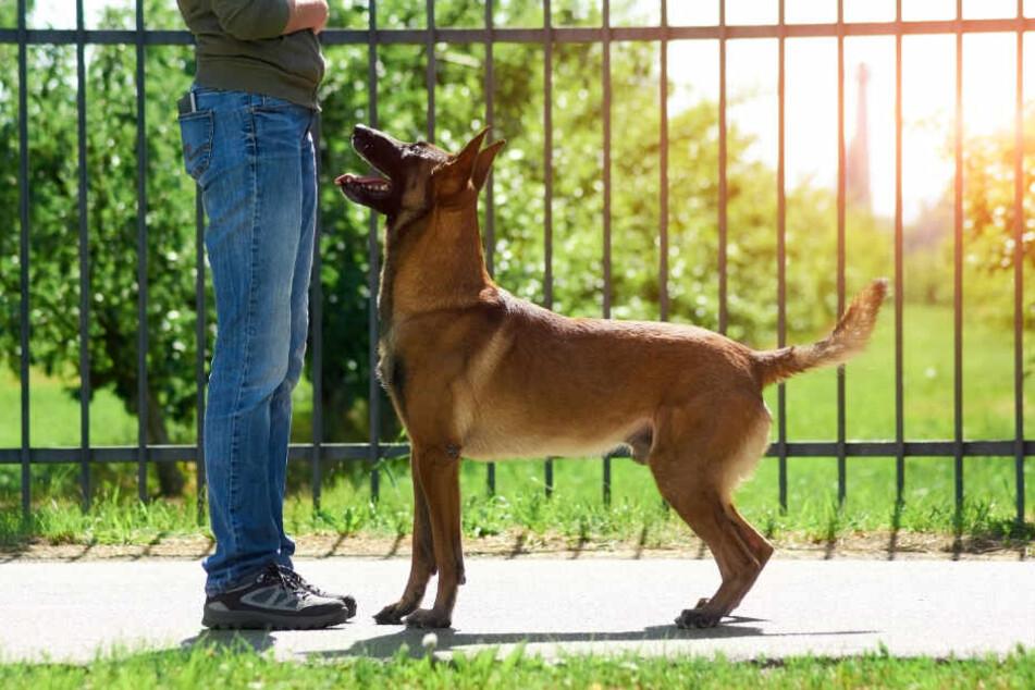 Hunde können sich bei starker Hitze aufgrund ihrer empfindlichen Pfoten schnell verbrennen. (Symbolbild)