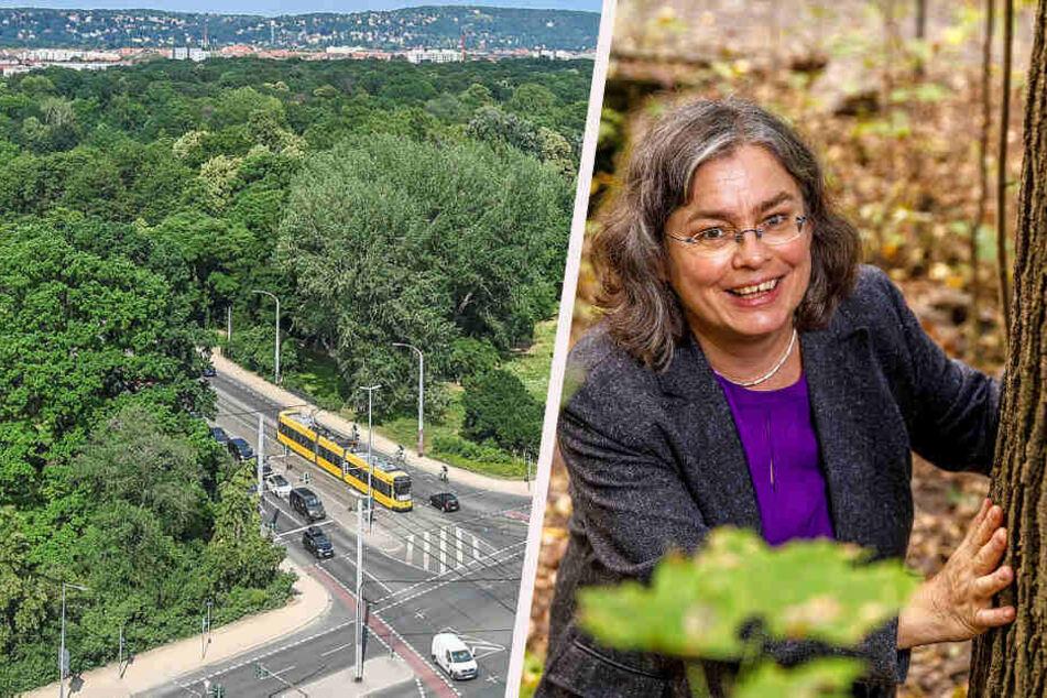 Grüne fordern radikales Maßnahmenpaket: So soll Dresden gegen den Klimawandel ankämpfen