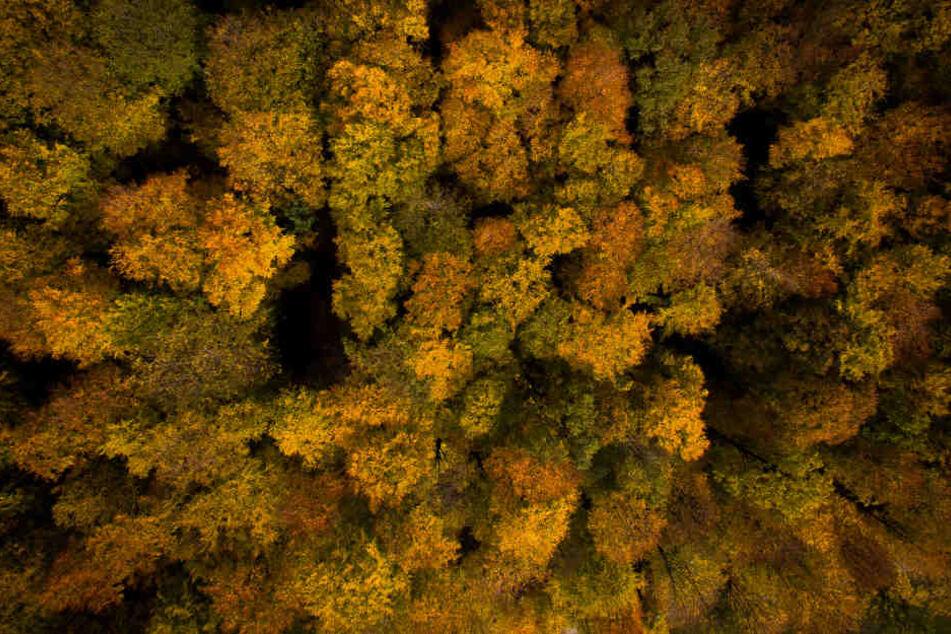 So sieht der Wald in NRW aktuell aus.