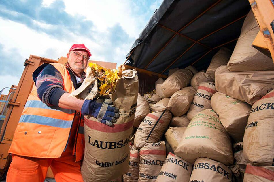Voller Laubcontainer: ASR-Mitarbeiter Volkmar Schalling (59) beim Umstapeln der 60-Liter-Laubsäcke auf dem Wertstoffhof in der Blankenburger Straße.