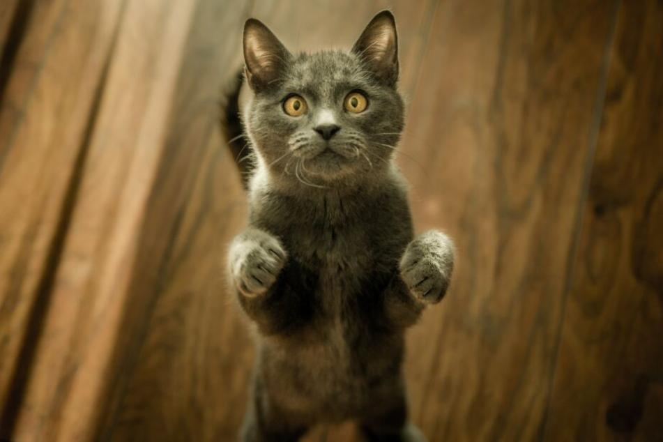 Katzen haben natürlich nur ein Leben, welches sie perfekt meistern.