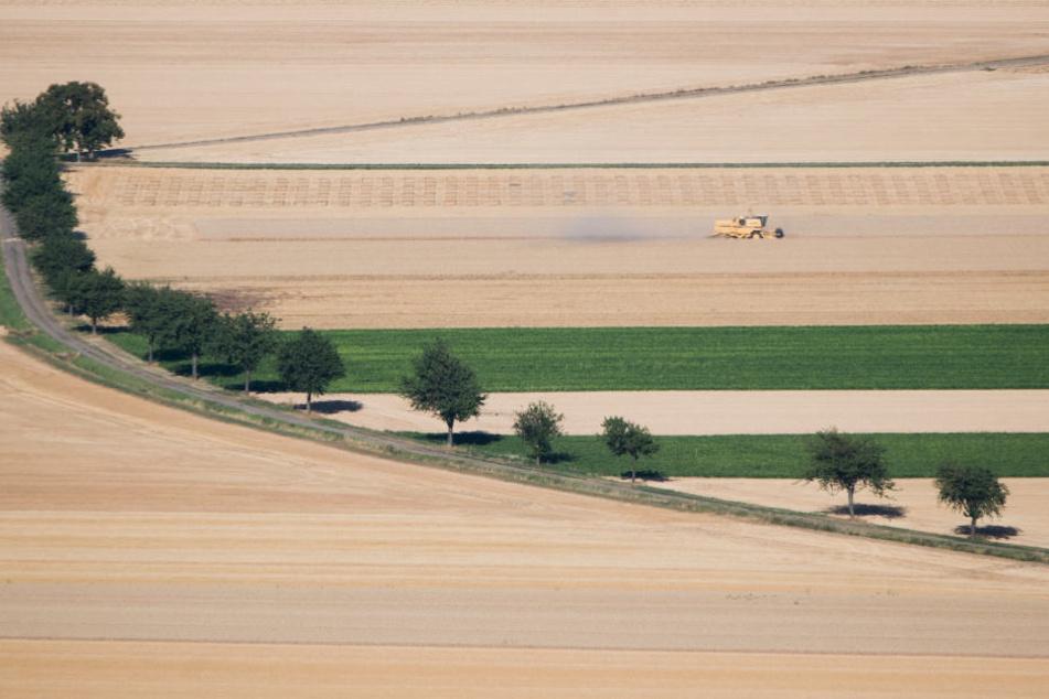 Getreide ist in NRW weiterhin die bedeutendste Ackerfrucht.