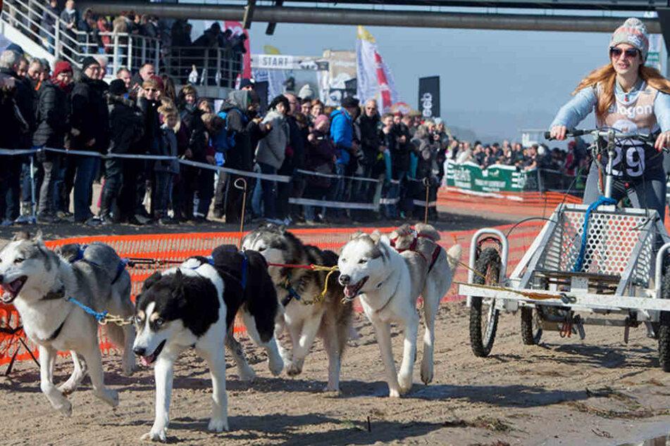 Schrecklicher Vorfall an der Ostsee! Hunde sollten in Glasscherben und Nägel treten