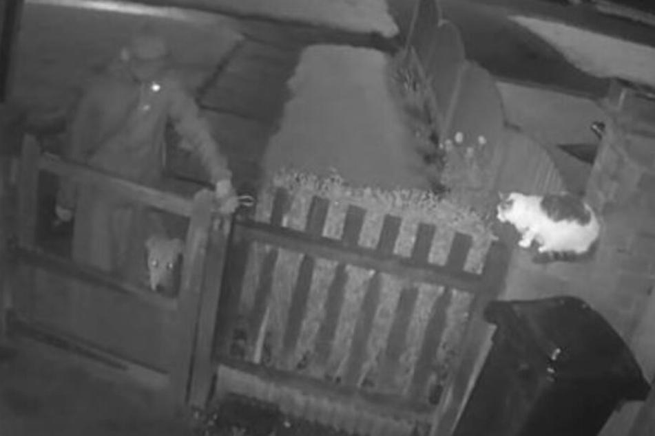 Auf den Bildern der Überwachungskamera ist zu sehen, wie sich der Mann mit seinem Hund der Katze nähert.