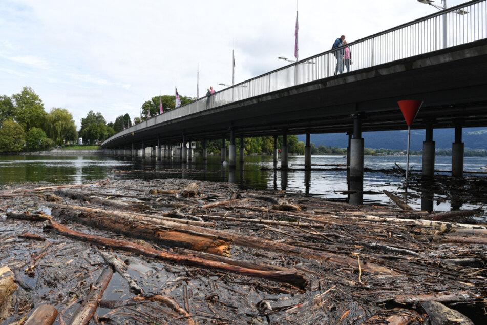 Nach starken Regenfällen: Riesige Treibholzfelder behindern Schifffahrt auf dem Bodensee