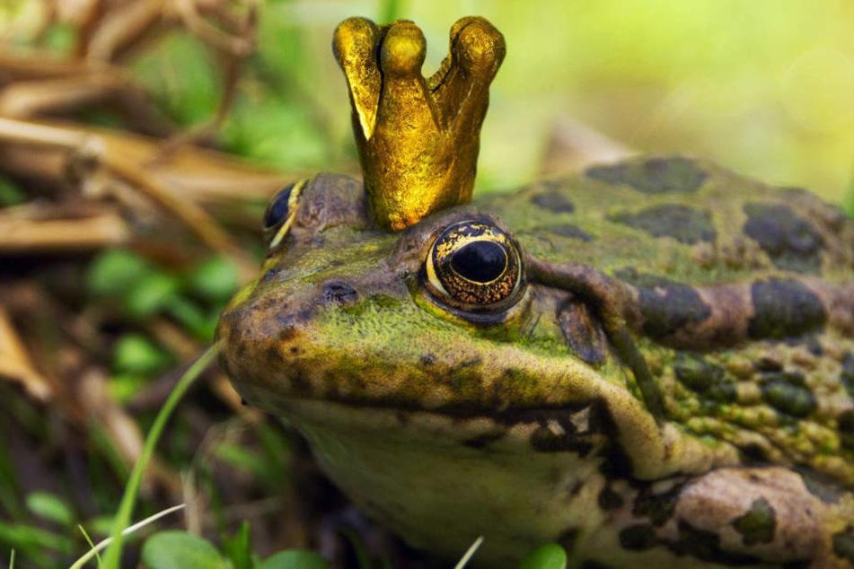 Seine Krone trägt der Erfurter Froschkönig erstmal nicht mehr. (Symbolbild)