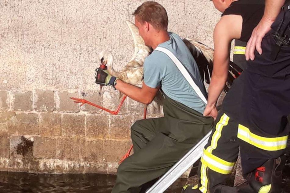 Mit Wathose und Leiter holten die Feuerwehrmänner die Störche aus dem Wasser.