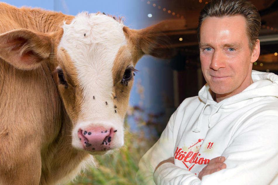 Irrer Insta-Post: Jürgen Milski steht auf eine(r) Kuh