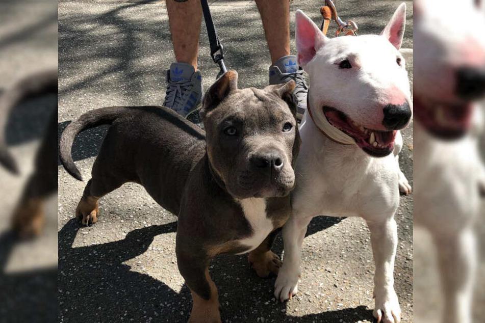 Mit Skittlez (links) und Sucuk hat Bonez MC bereits zwei Hunde.
