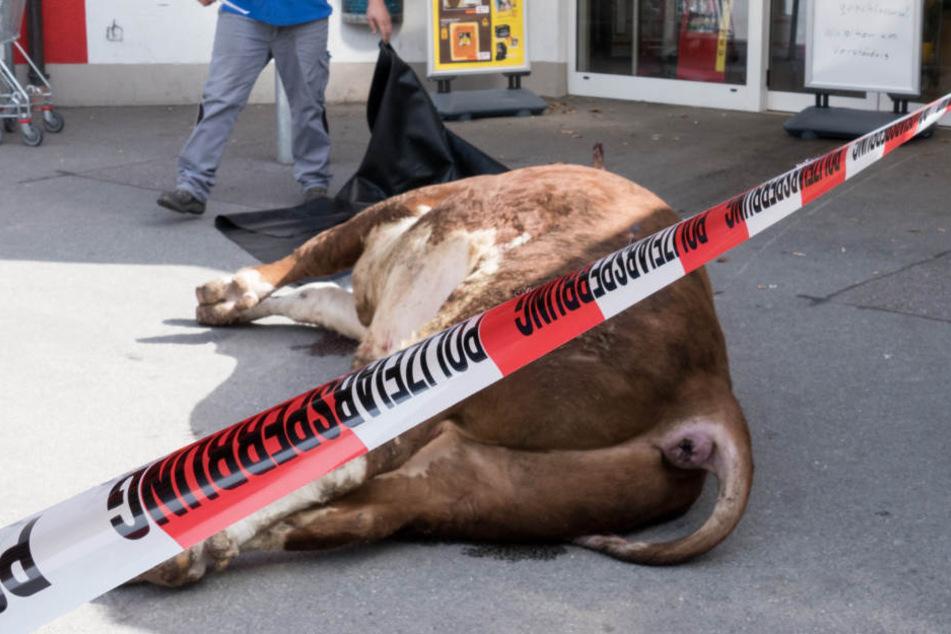 Der Bulle musste von den alarmierten Polizisten erschossen werden. (Symbolbild)