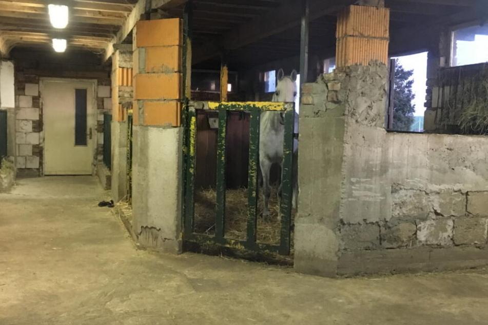 In diesem Stall dürfen keine Pferde mehr gehalten werden.