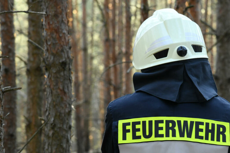 Mit Temperaturen weit über 20 Grad steigt Waldbrandgefahr