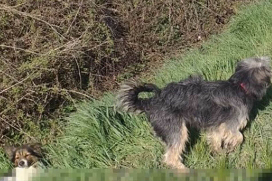 Der verletzte Hund lag im Straßengraben.