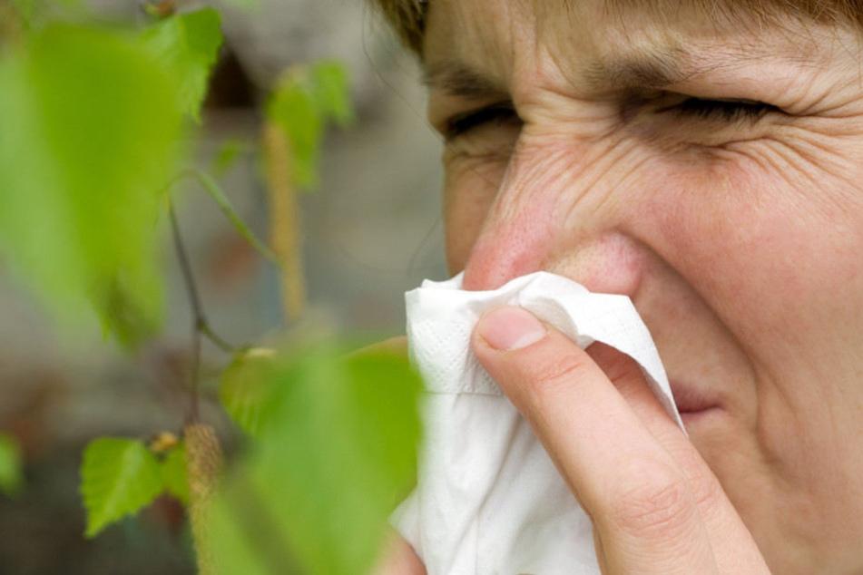 Allergiker werden mit den Birkenpollen in den nächsten Wochen ihre Probleme haben. (Symbolbild)