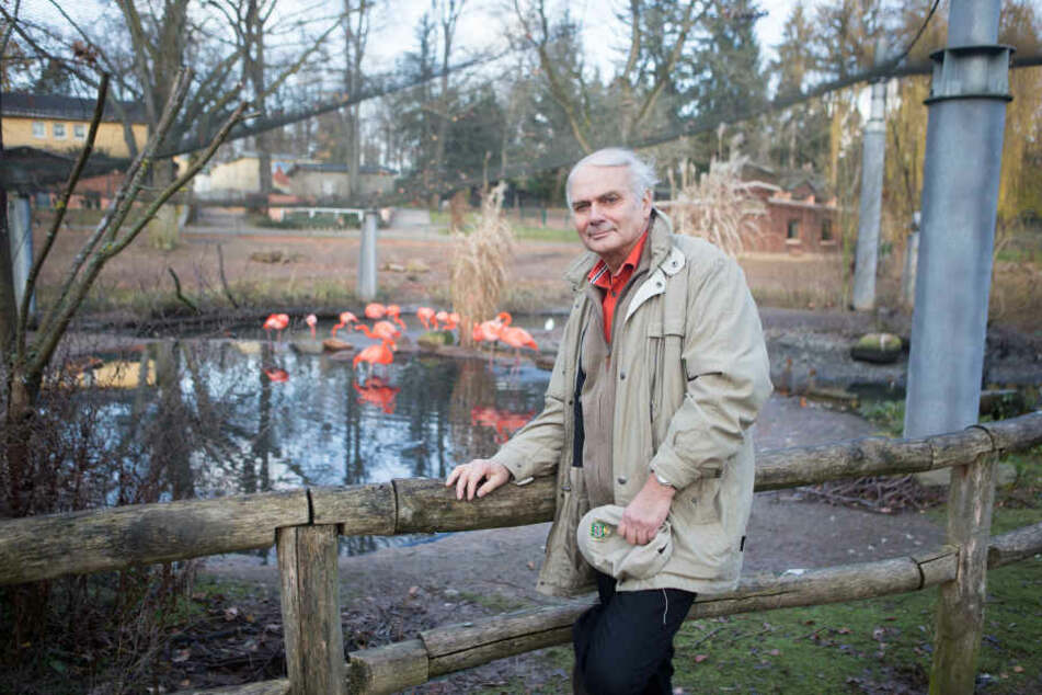 Heimatliebe pur: TV-Tierarzt Klaus Eulenberger (74) im Flamingoland, dem ersten umgesetzten Projekt des von ihm erstellten Masterplans für den Amerika-Tierpark Limbach-Oberfrohna.