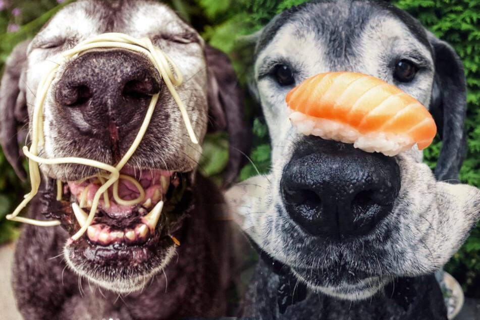 Dank Pasta, Sushi und Co.: Dieser Hund ist ein wahrer Instagram-Star