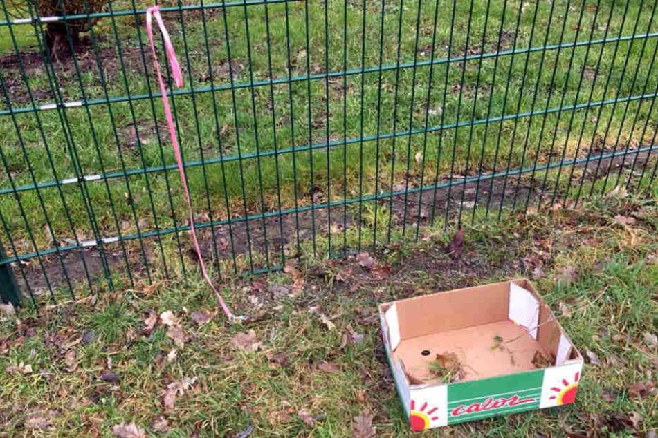 Nur eine Leine und einen mehr oder weniger leeren Karton fand eine Tierheim-Mitarbeiterin am Mittwoch.